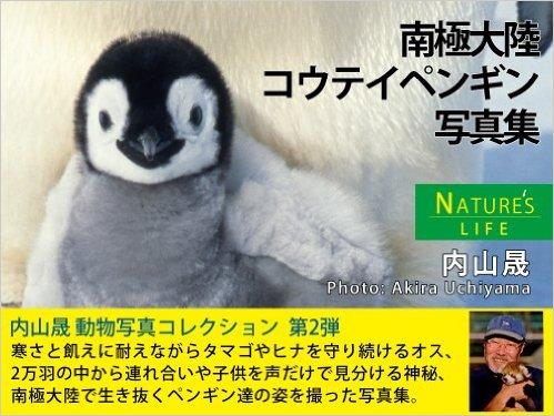 南極大陸 コウテイペンギン写真集